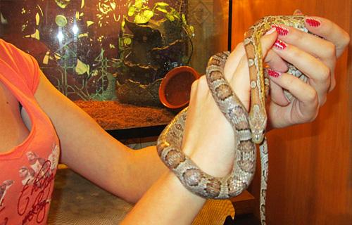 Беременной девушке приснились змеи 40