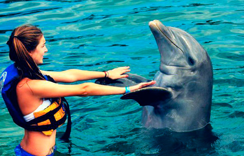 свежие гладить дельфина во сне орешка для