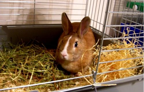 Куплю декоративных кроликов в домашних условиях