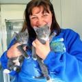 Женщина бросила карьеру ради бездомных котят